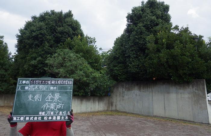公園高木剪定